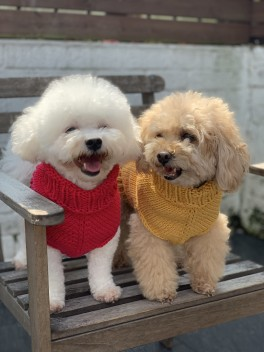 The Pooch Sweater Kit
